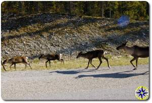 caribou side of the road