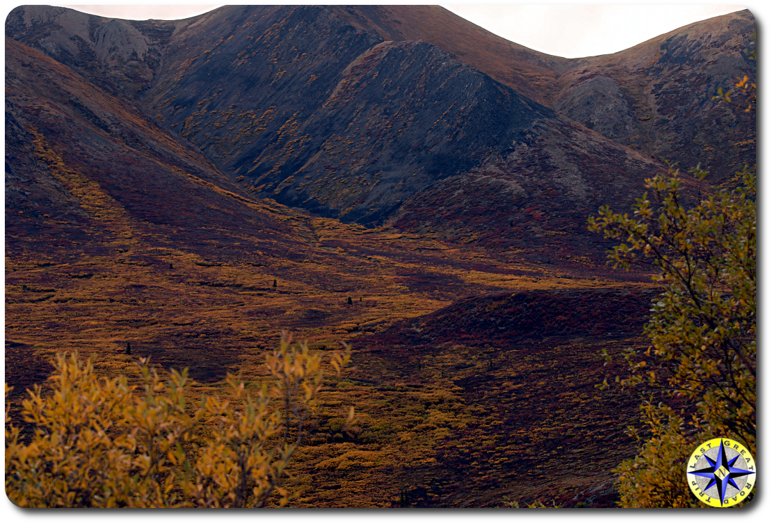 fall colors dempster highway
