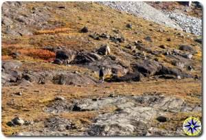 hiking alaska brooks range foothills