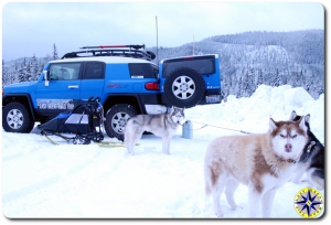 fj cruiser sled dogs