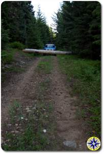 tree blocking two track 4x4 trail
