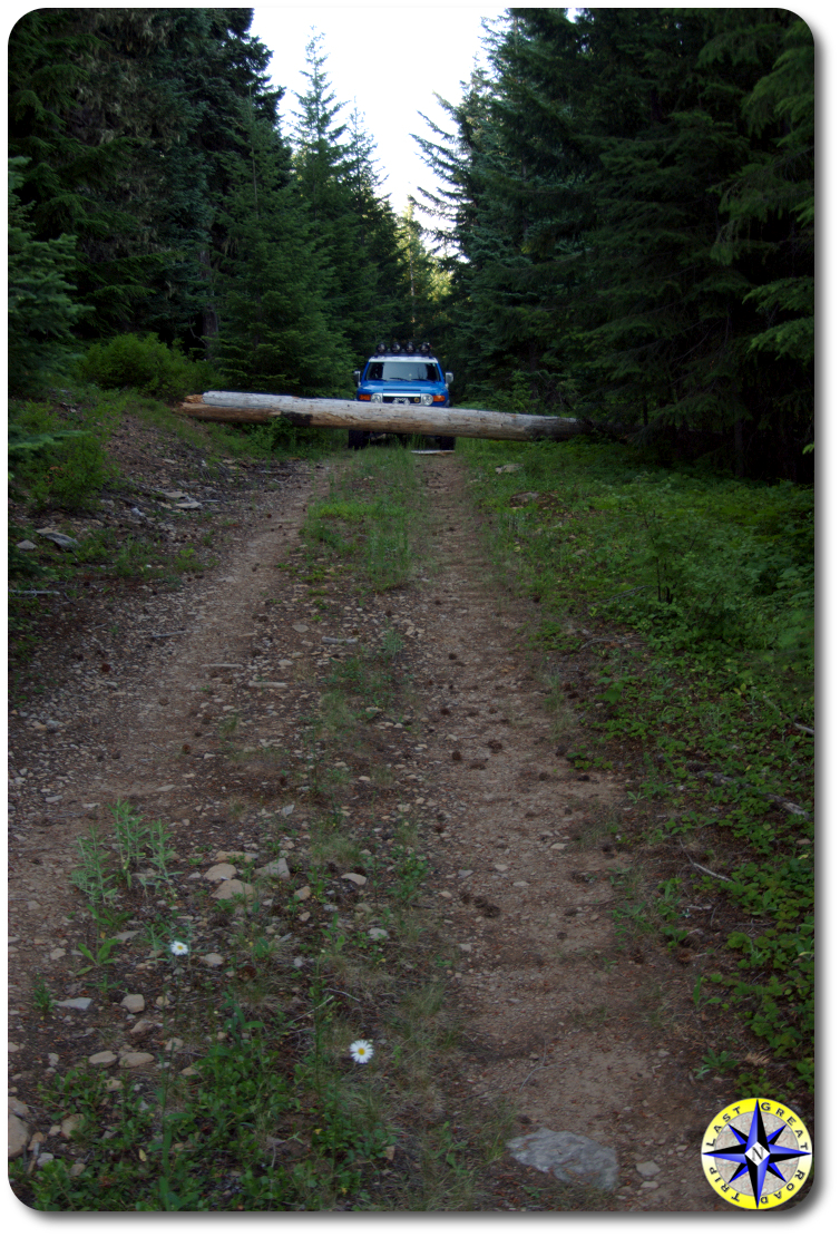 tree blocking two track 4x4 trail