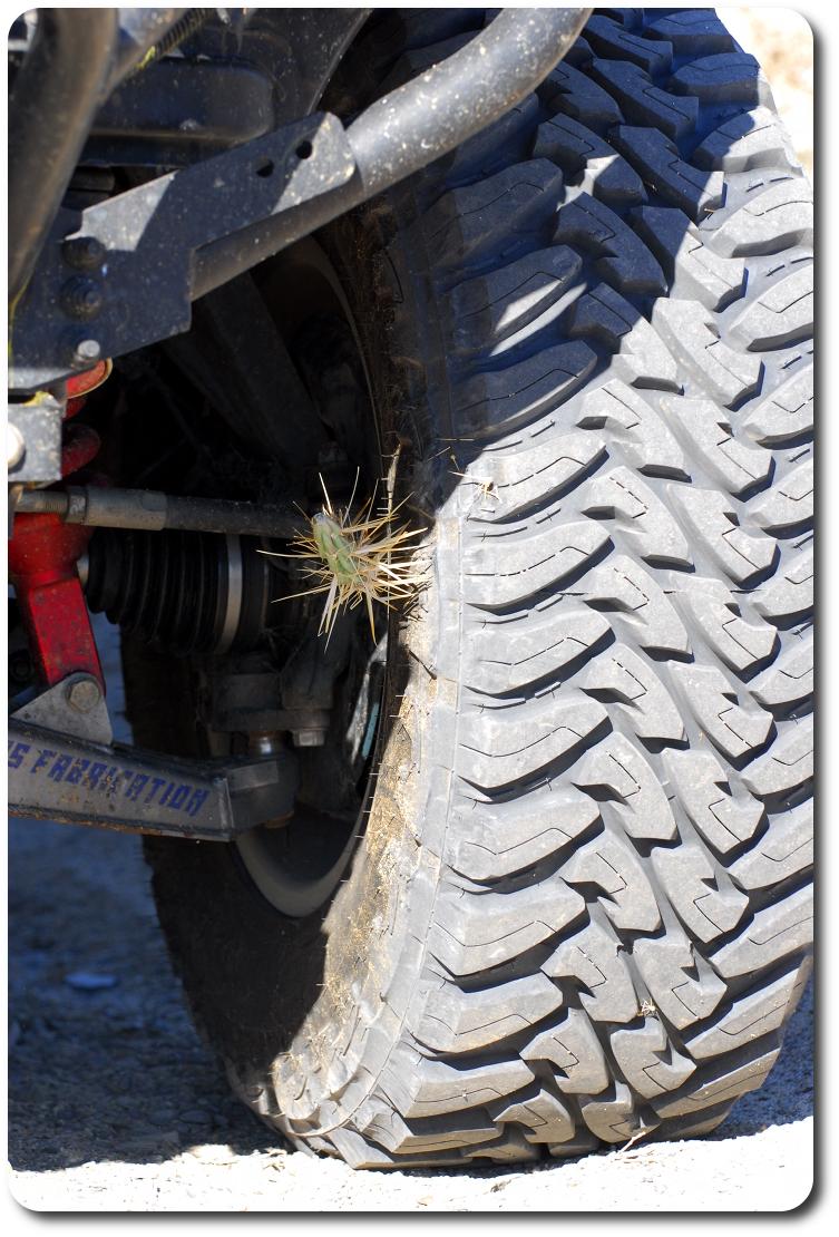 cactus in tire