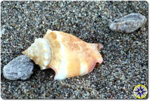 close up shell beach sand