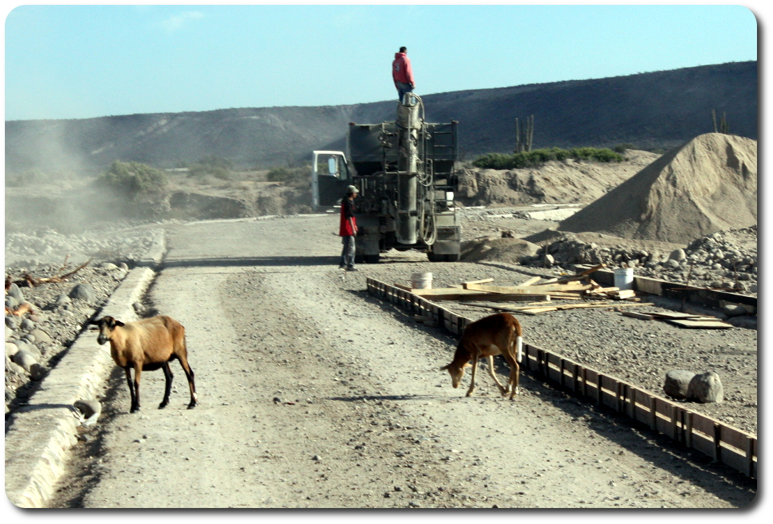 Goats Baja roadwork