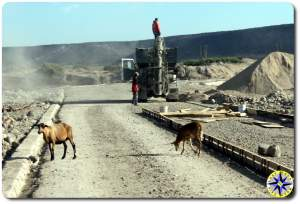 baja mexico road work and goats crossing