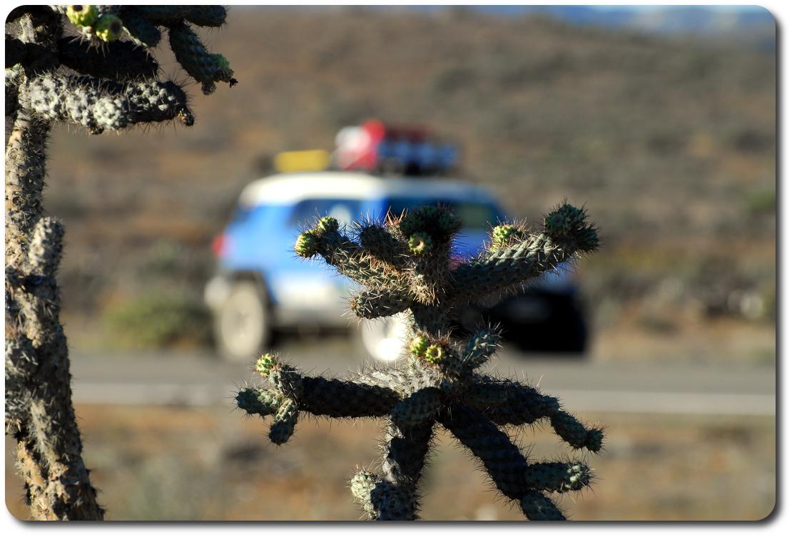 cactus fj cruiser