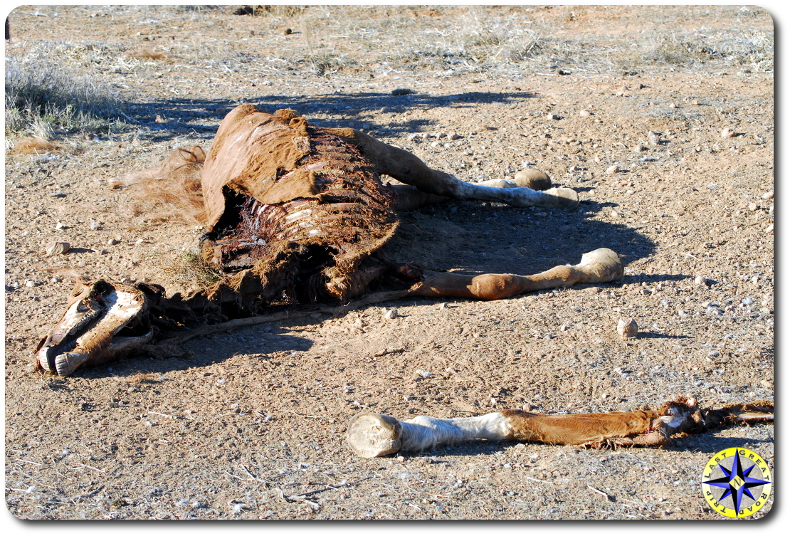 dead horse baja mexico