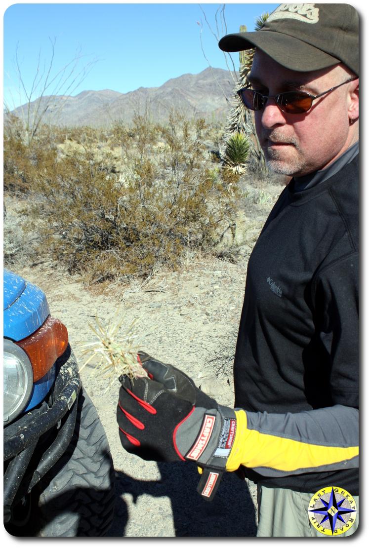 man holding baja cactus in hand