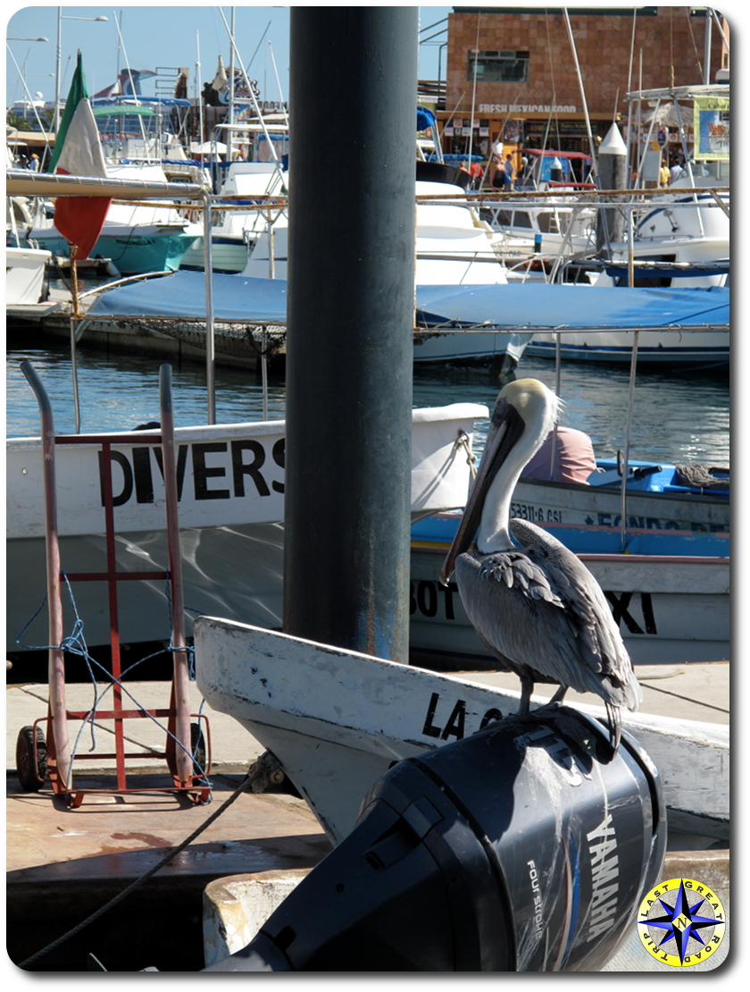 pelican boat cabo san lucas