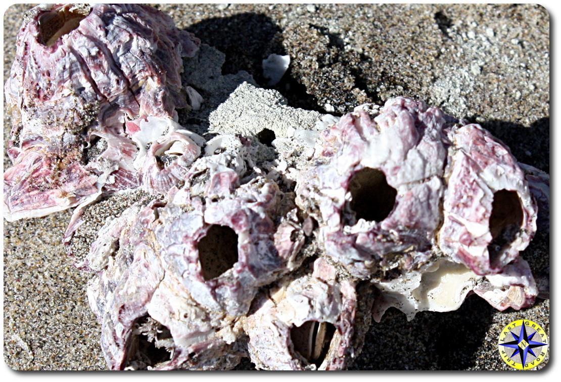 pink beach shells on sand