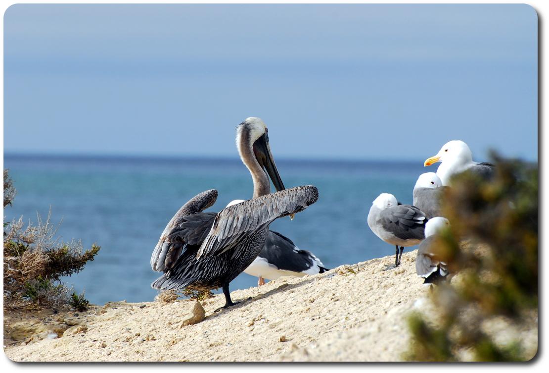 scorpion bay birds