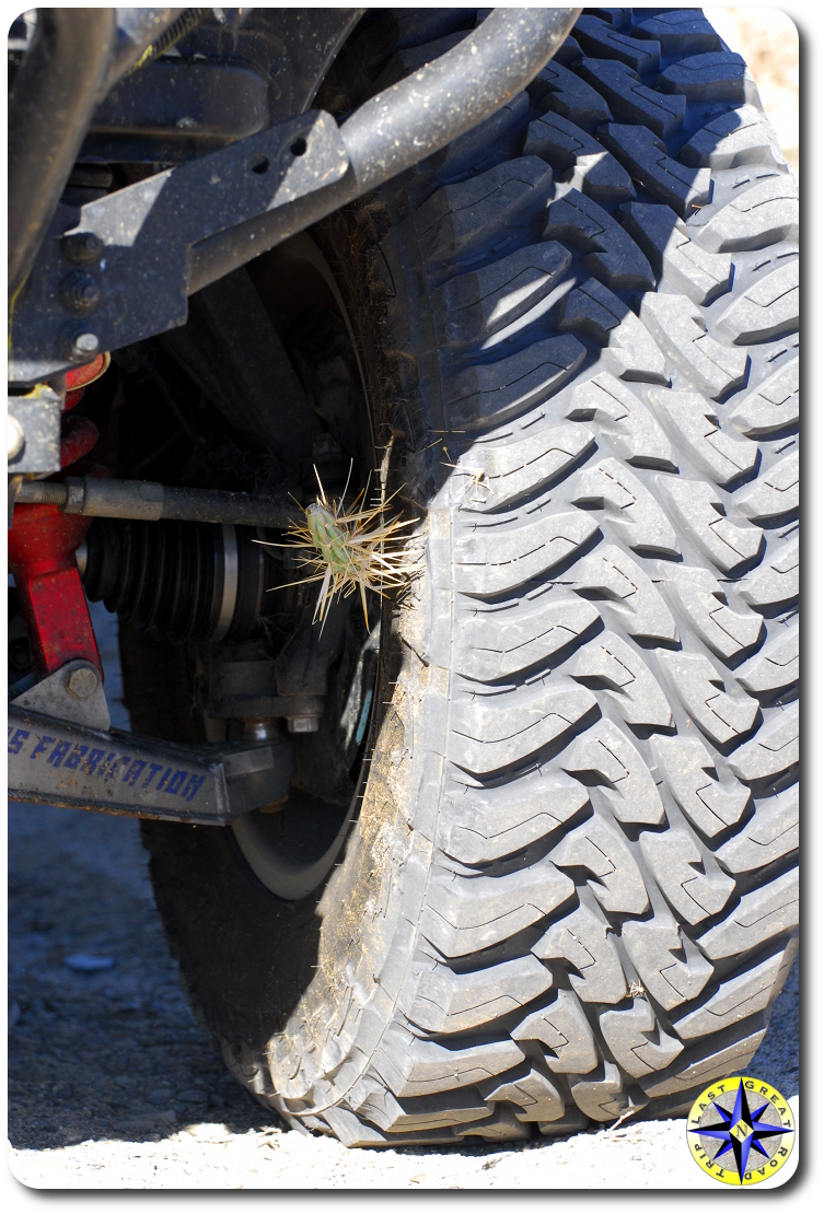 sharp cactus in tire sidewall toyo open country