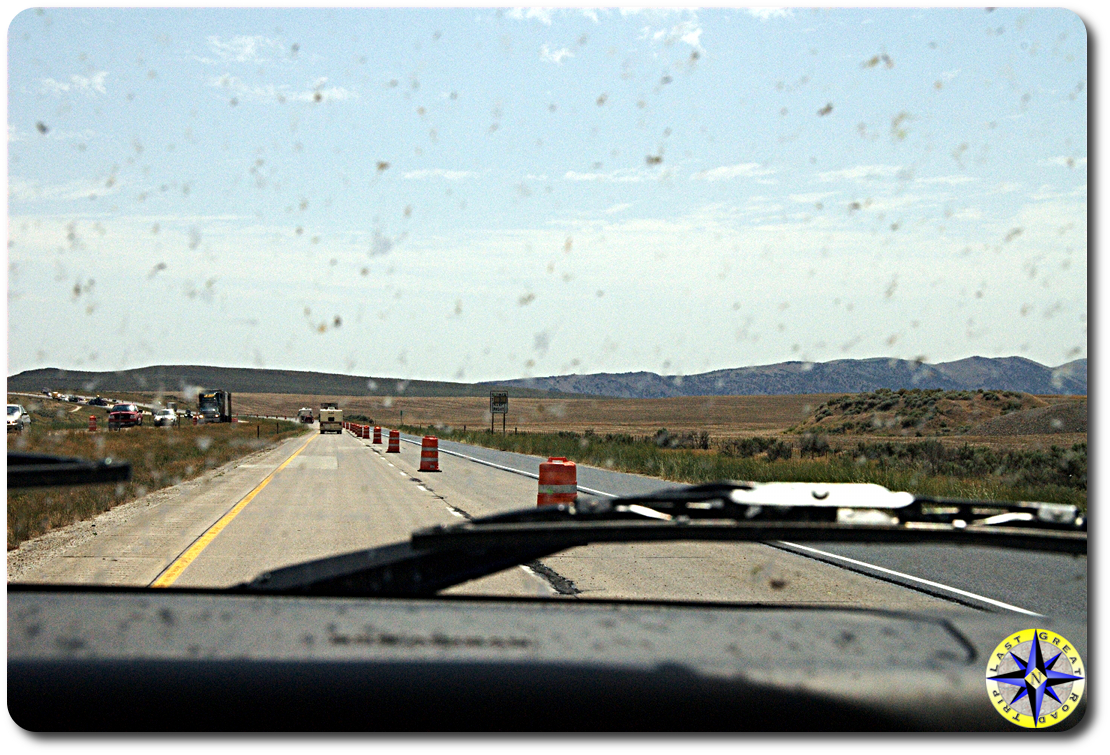 orange barrels on road and bug on windshield