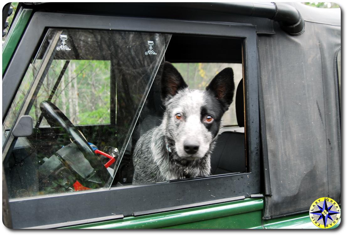 dog days wheeling