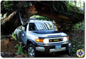 FJ Cruiser under ceder tree