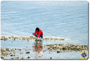 shellfish harvest