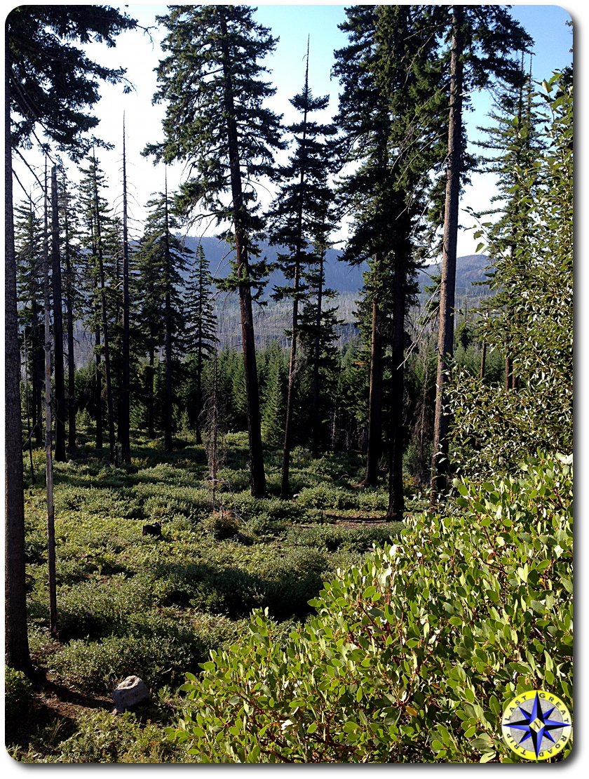 central oregon forest view