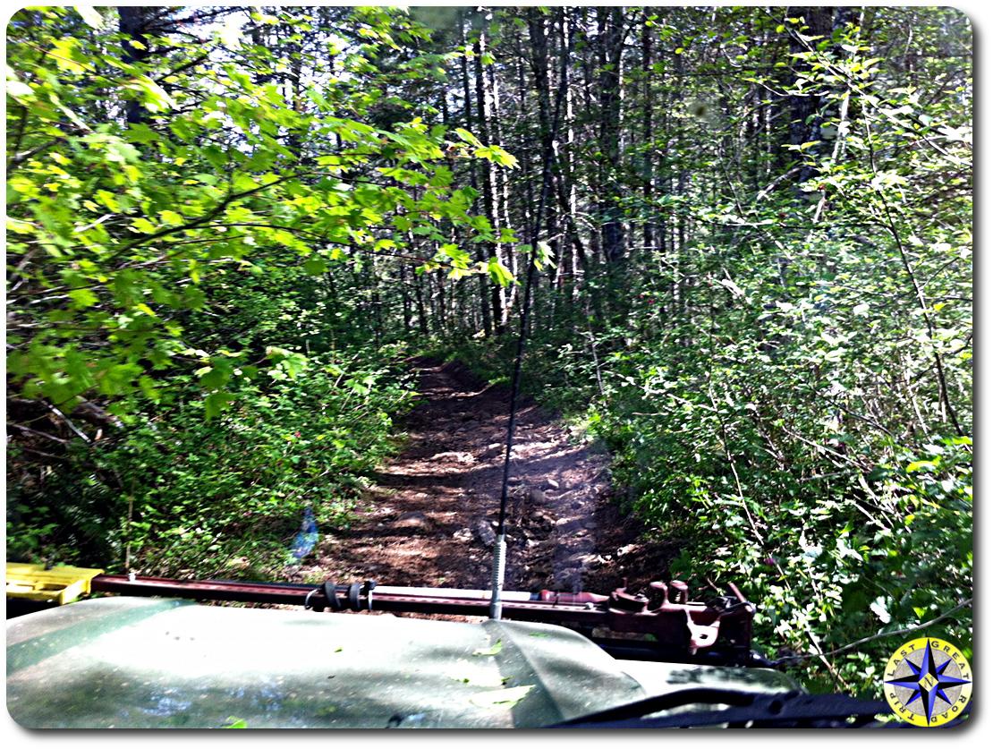 overgrown 4x4 trail