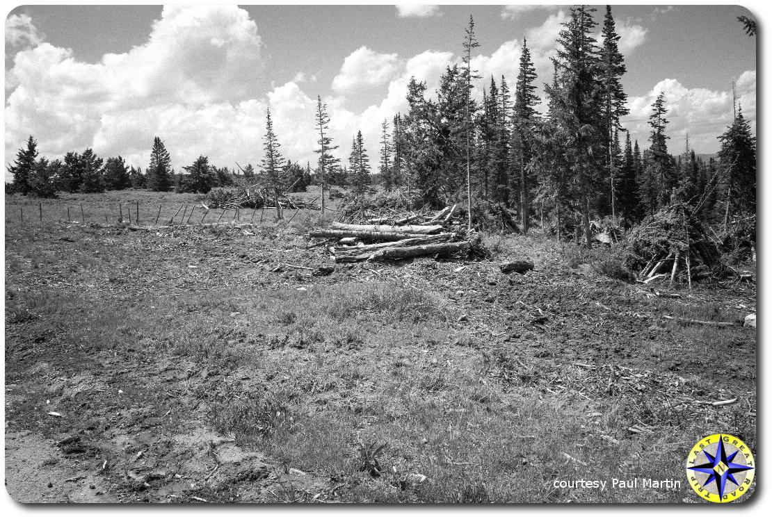 utah forest meadow