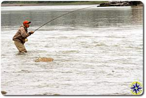 fly fisherman with stealhead on