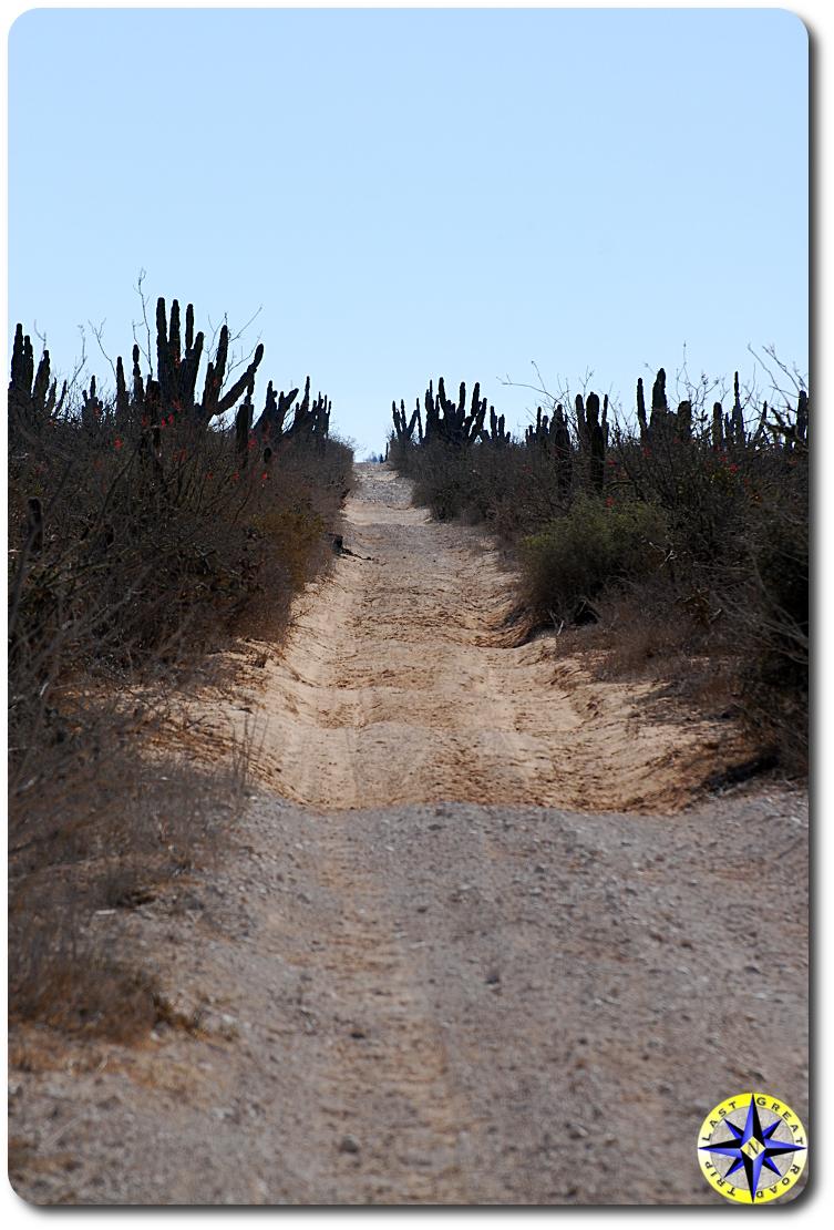 baja mexico dirt road cactus