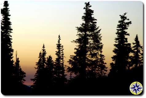 sunset seen between pine trees