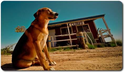 west texas dog days