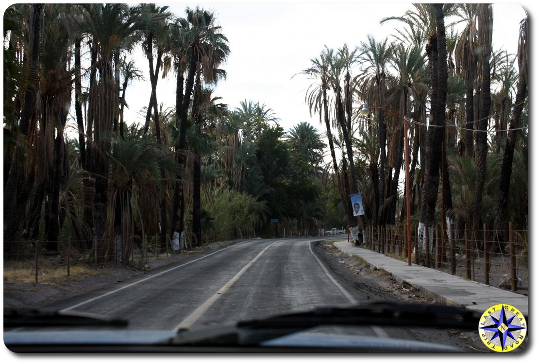 baja mexico oasis palm trees