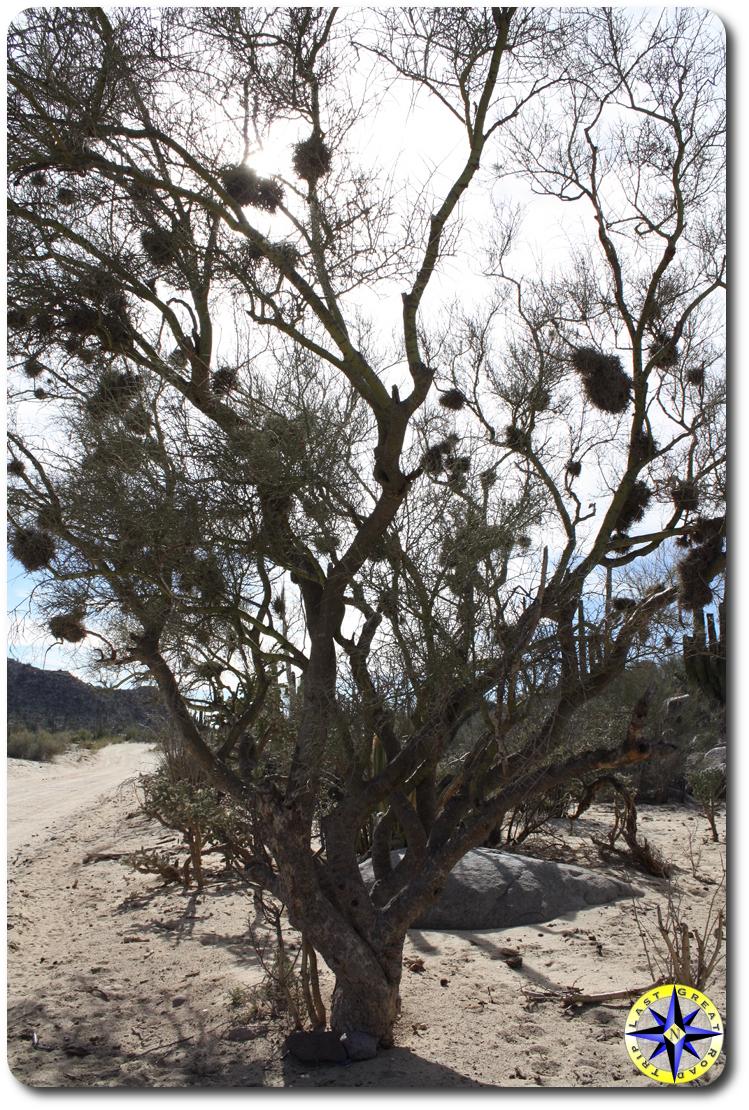 knotty tree bird nests