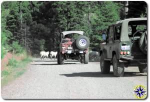 sheep crossing road fj40 D90