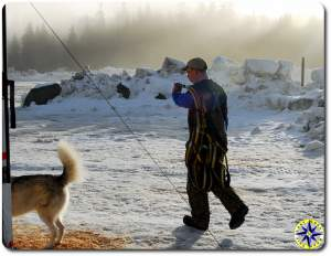 musher with dog harnesses