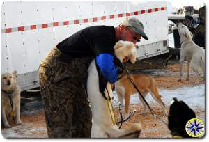 musher and sled dogs