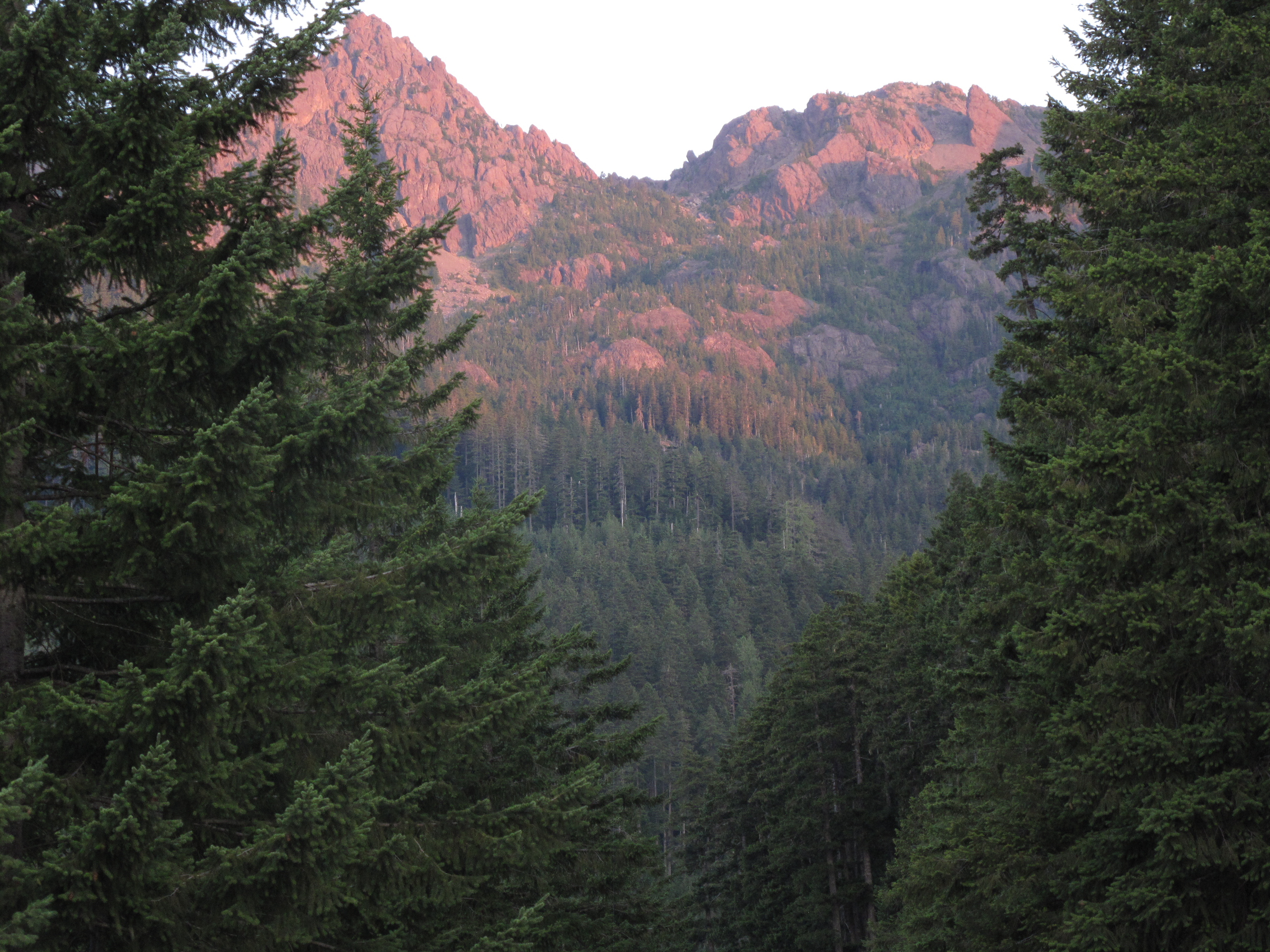 mountain view between trees
