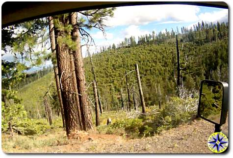 mountain tree view from car